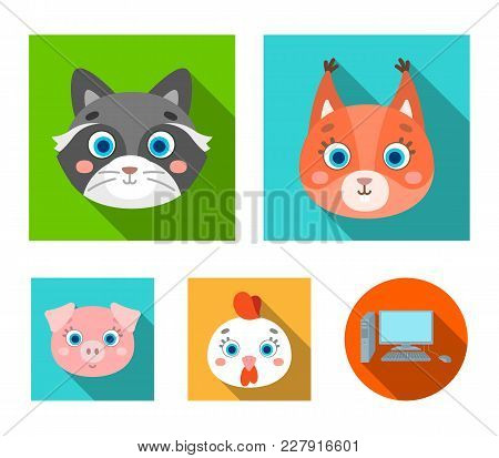 Protein, Raccoon, Chicken, Pig. Animal's Muzzle Set Collection Icons In Flat Style Vector Symbol Sto