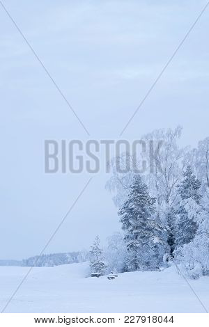 Trees Covered In Frost Snow Nature Winter Lakeside Scene
