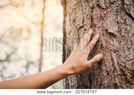 Man Touching Big Tree Color Of Hipster Tone Selective Soft Focus, Concept Nature And People Protect