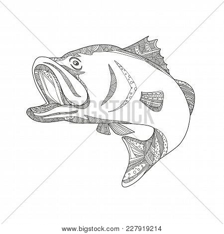 Doodle Art Illustration Of A Barramundi Or Asian Sea Bass (lates Calcarifer), A Species Of Catadromo