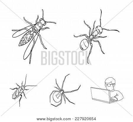 An Insect Arthropod, An Osa, A Spider, A Cockroach. Insects Set Collection Icons In Outline Style Ve
