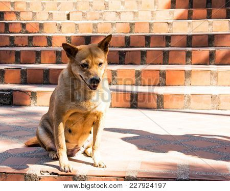 A Brown Dog Sitting On An Orange Stone Stairs. On A Cold Day. It Looks Sad And Bored When It Waiting