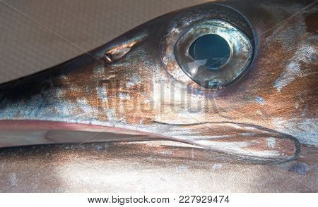 Eye Of Striped Marlin On Charter Sport Fishing Boat
