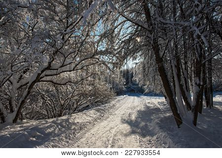 Backlighted, Snow-covered Trees In The Park In Winter