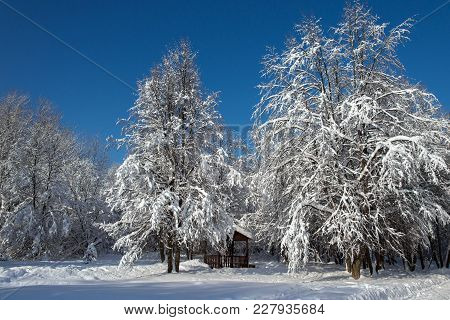 Snow-covered Trees And Summerhouse In The Park