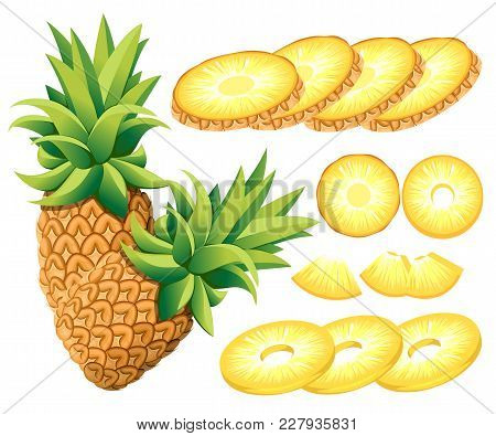 Pineapple And Slices Of Pineapples . Vector Illustration Of Pineapples . Vector Illustration For Dec
