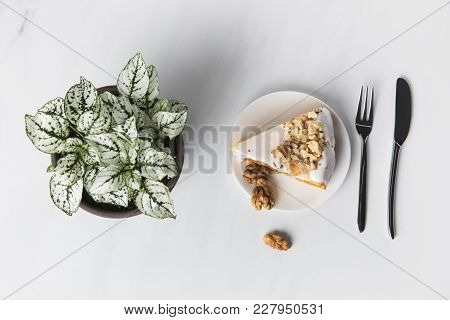 Walnut Cake On Plate With Fork And Knife Near Plant Pot