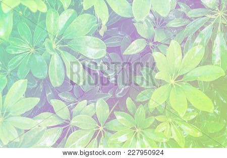 Close Up Of Fresh Green Foliage, Design For The Background