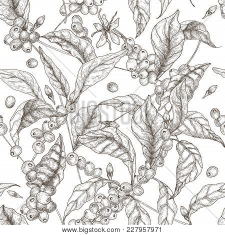 Beautiful Seamless Pattern With Coffea Or Coffee Tree Branches, Leaves, Blooming Flowers And Fruits