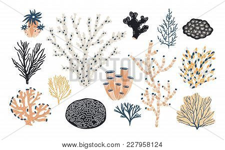 Collection Of Various Corals And Seaweed Or Algae Isolated On White Background. Beautiful Underwater