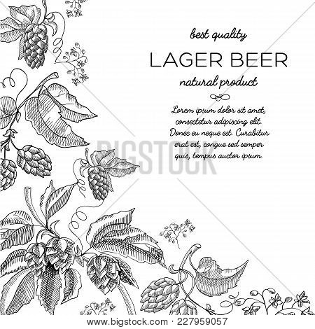 Corner Frame Hop Vignette Ornament Doodle With Text About Natural Product Lager Beer And Best Qualit