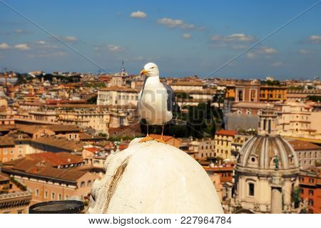 Seagull On The Outlook Above Historical Center Of Rome. Seagull Stands Over The Roofs Of Roma. Seagu