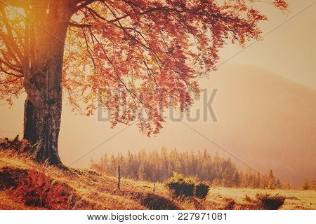 Vintage Style Photo Of Fall Colors Tree