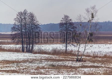 Meadows On The Edge Of Bialowieza Forest In Poland