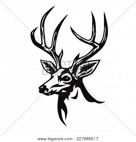 Deer Head Stylized Drawing. Logo Template Vector Art Illustration Design