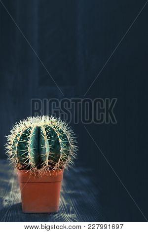 Cactus Fashion Design Still Life. Beautiful Cactus In Pot On Wooden Decoration. Minimal Creative Sti