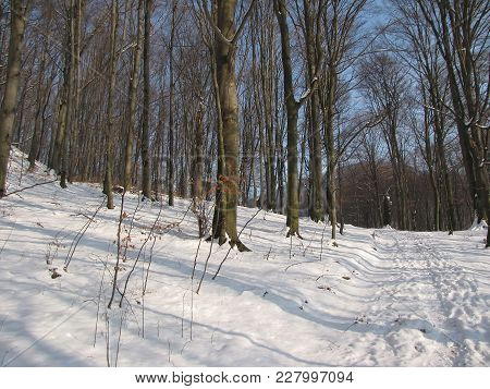 A Path In The Forest, A Mountain Path, A Winter Day In The Mountains, A Winter In The Carpathians, A