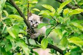Small kitten with blue ayes stuck on green tree on garden. Animal photography poster
