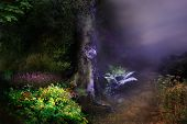 Composite in fantasy style featuring the night in magical forest. Just add your fairy on! poster