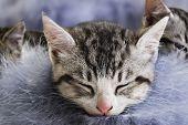 Adorable little kittens from the same litter poster