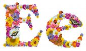 alphabet of flowers poster