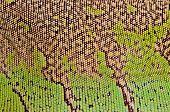 macro image of texture green iguana skin poster