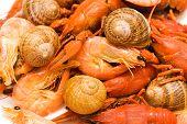 Seafood mix background - crawfishes shrimps snails poster
