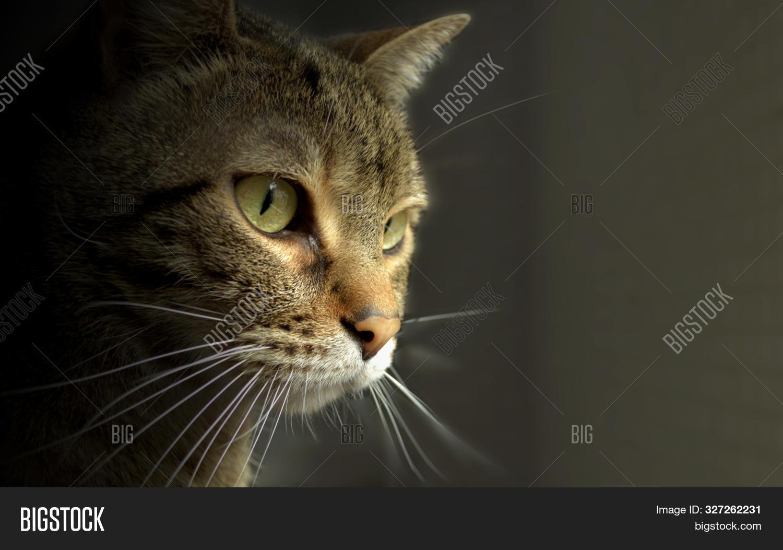 Cute Cat Profile Image Photo Free Trial Bigstock
