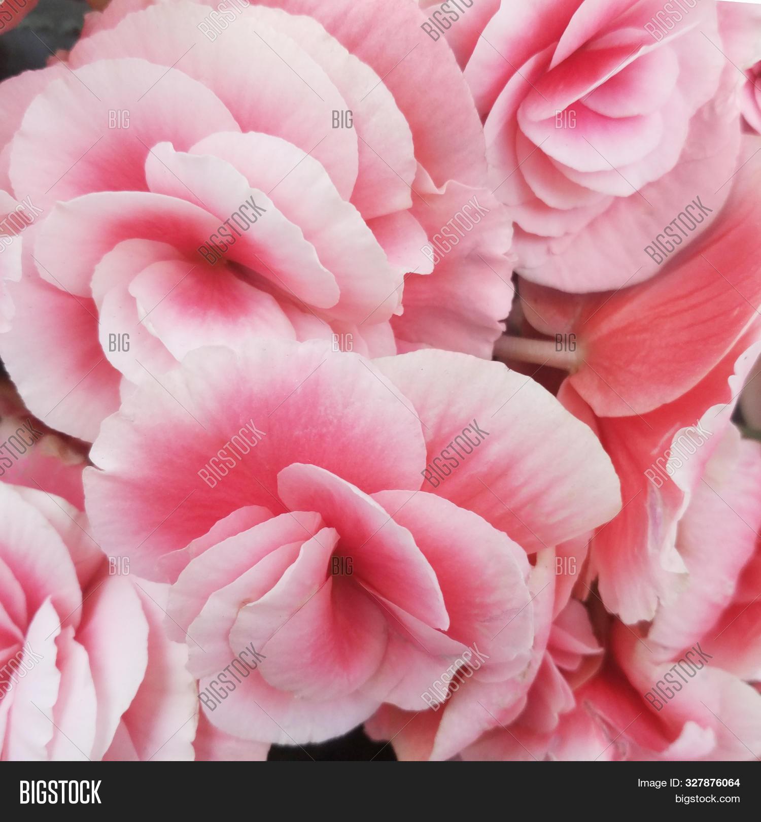 Beautiful Wallpaper Image Photo Free Trial Bigstock