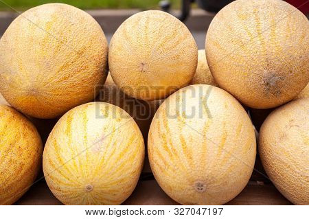 Fresh Yellow Melon. Many Melons In The Farmers Market. Ripe Yellow Melon, Counter Of Fresh Harvest A