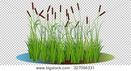 Reed Bushes In The Swamp Vector Illustration Transparent Background. Cartoon Props And Landscape Dec