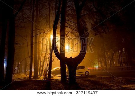 Obninsk, Russia - December 2017: Pine-lyra Near The City Park In Obninsk During A Thick Fog In The E