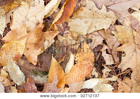 Leaves Decomposing