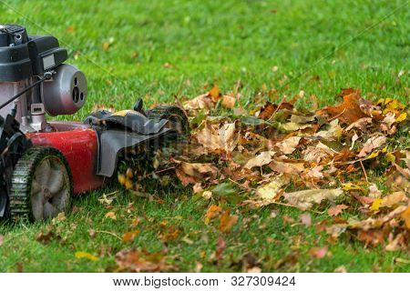 Lawn mover mulching up fall leaves.