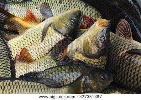 there are fresh silvery live freshwater carp fish for sale in the store, in the market. Food background: freshly caught fish. the concept of healthy food, fish business. poster