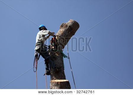 Dangerous Jobs Tree Trimmer