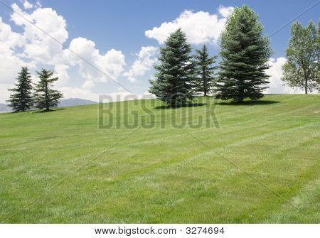 Grass Meadow And Deep Blue Sky
