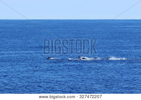 Group Of Dolphins Swimming And Jumping In The Ocean On The Background Of Blue Water And Horizon. Com
