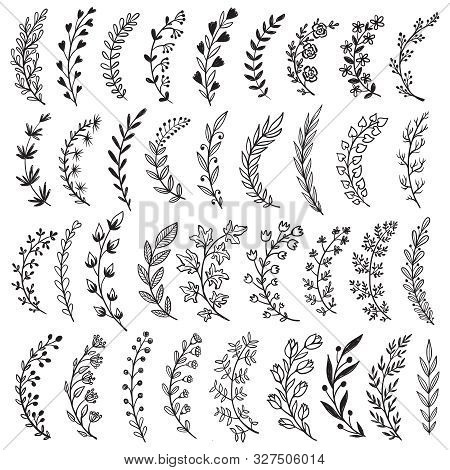 Big Set Of Hand Drawn Vector Plants And Branches With Leaves, Flowers, Berries. Floral Sketch Collec