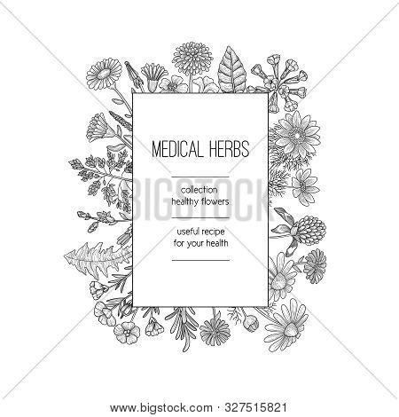 Herbs Frame. Herbal Background Design For Spa Medical Concept Nature Herbs Plants Hand Drawn Vector