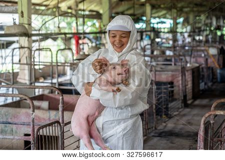 Asian Veterinarian Working And Checking The Healthy Of Young Pig In Hog Farms, Animal And Pigs Farm