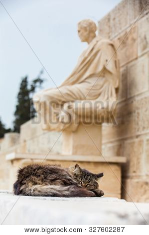 Cat Sleeping Next To The Statue Of The Dramatist Menander At The Theatre Of Dionysus Eleuthereus The