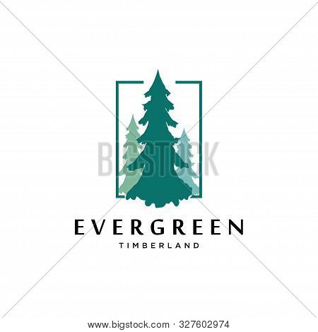 Pines Tree Logo Design Vector Template.pine Forest Illustration Icon