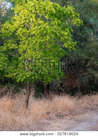 Tree Photo With Nice Green Gradient In Leaves