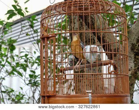Cage Bird Singing At The Bird Market Of Mongkok In Hong Kong