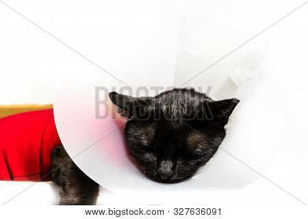 Close Up Of Black Cat With Elizabethan Collar, E-collar, Buster Collar Or Pet Cone On White Backgoru