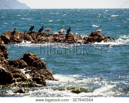 Cormorants And Gulls Sitting On The Rock In Storming Sea