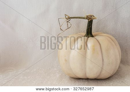 White Pumpkin Gourd With Curly Stem Against White Background