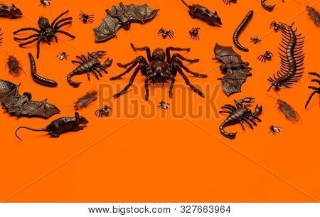 Black Halloween creepy crawly bugs and spiders on orange background with blank space for text
