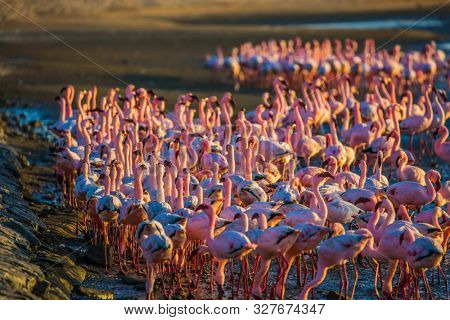 Birds feed in the shallow water of the Swakopmund. Interesting and useful birdwatching. Namibia. Africa. Huge colony of pink flamingos. Ecological, active and photo tourism concept